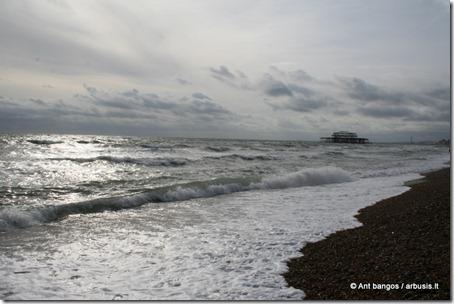 Brighton [arbusis.lt]